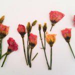 Bloemen drogen in de magnetron