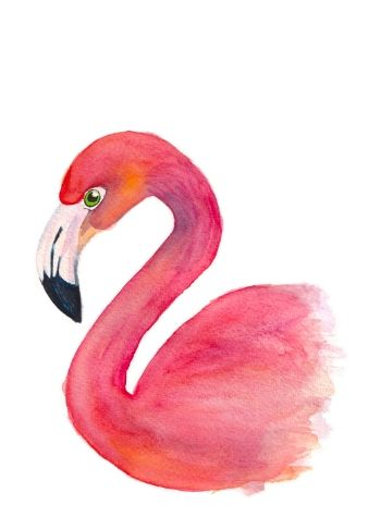 fritsy kaart flamingo aquarel