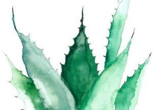 aloe vera plant afbeelding waterverf aquarel