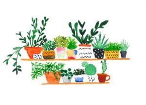 cactussen verzameling illustratie