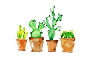 cactussen bruine pot schattig groen
