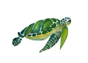 schildpad illustratie waterverf