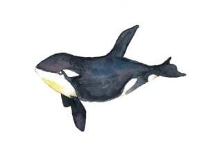 walvis kaart waterverf