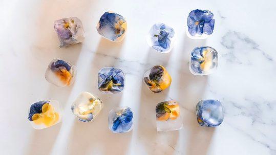 ijsklontjes ijsblokjes met eetbare bloemen